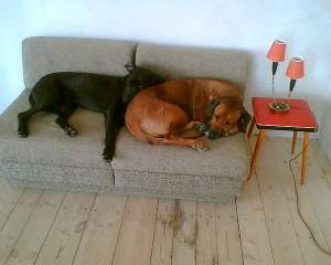 couchsurfing dogs